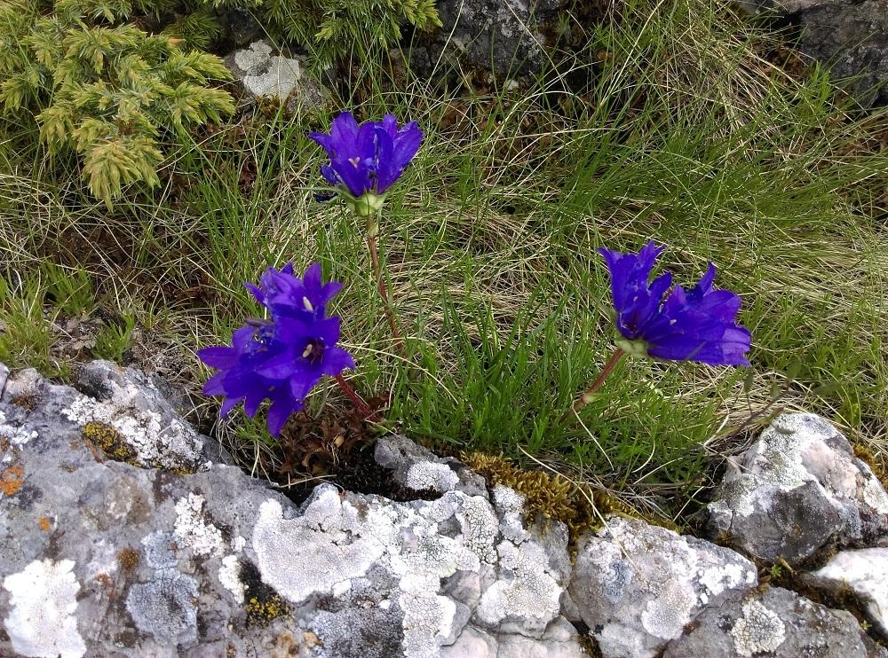 flora montenegro