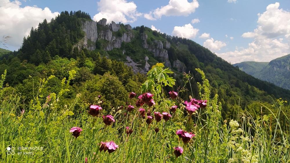 flora Montenegro Biogradska gora