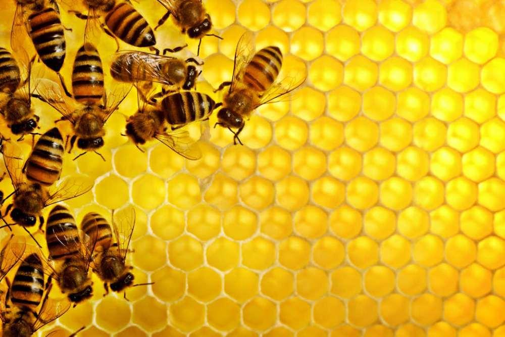 Najzdraviji med