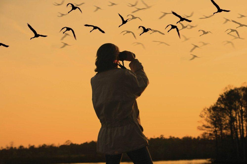 Birdwatching montenegro